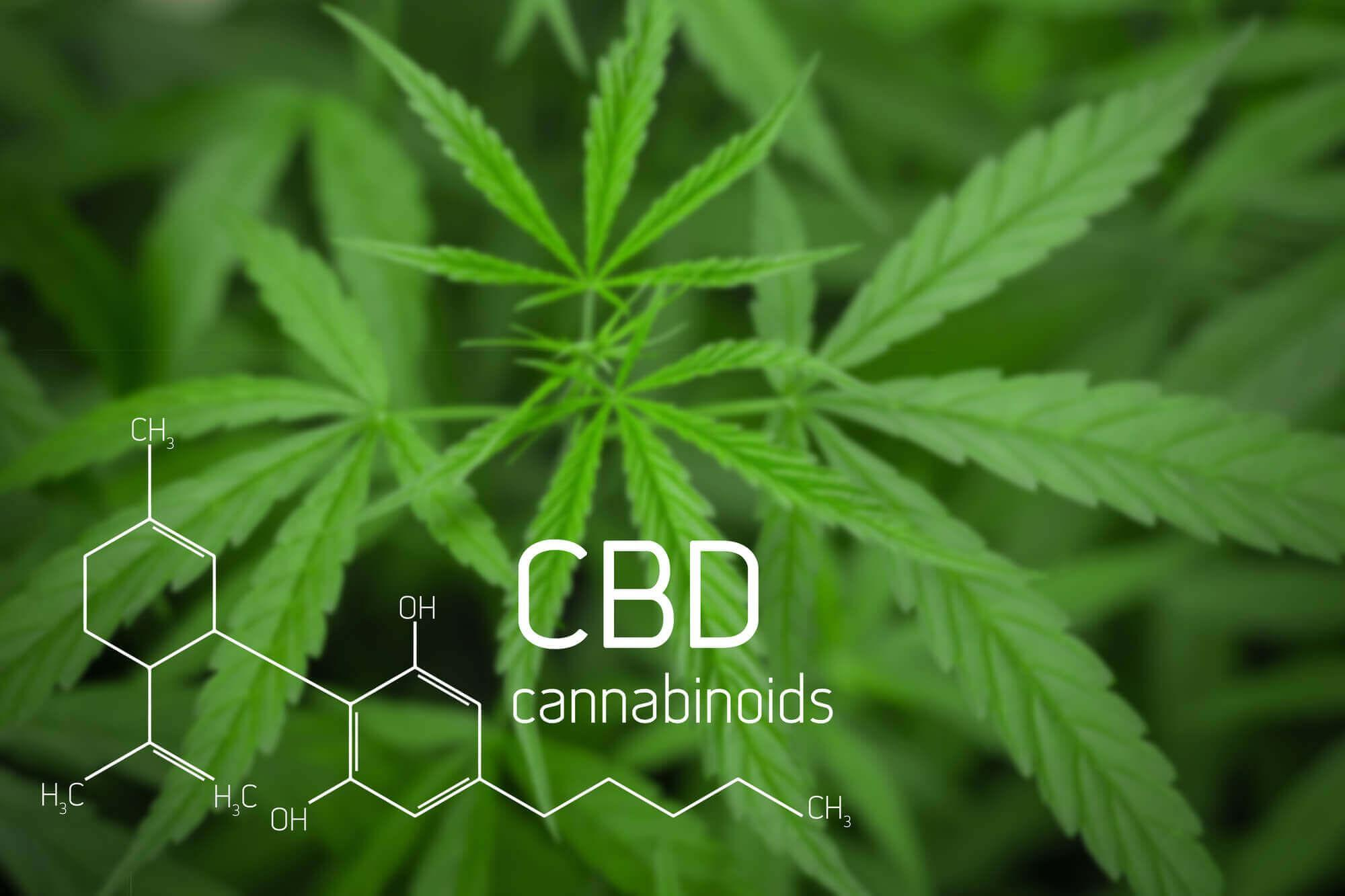 cbd oil for brain health